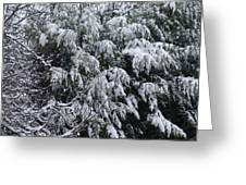 Snowy Branches Winter Greeting Card