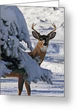 Snowy Buck Greeting Card