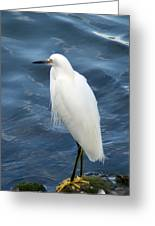 Snowy Egret 1 Greeting Card