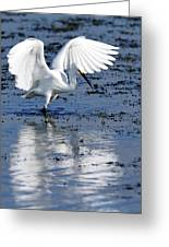 Snowy Egret Fishing Greeting Card