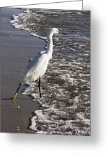 Snowy Egret Walking Greeting Card