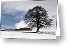Snowy Field And Tree Greeting Card