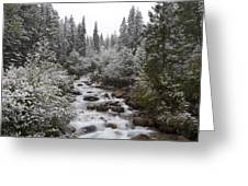Snowy Foliage Along Stream In Autumn Greeting Card