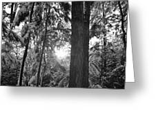 Snowy Forest Bw Greeting Card
