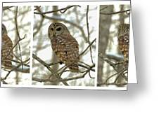 Snowy Morning Owl Triptic - 10dec563a Greeting Card