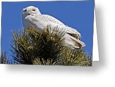 Snowy Owl High Perch Greeting Card