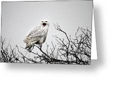 Snowy Owl In A Tree Greeting Card