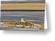 Snowy Owl Perched Frozenpond Greeting Card