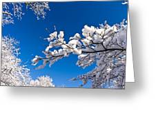 Snowy Trees And Blue Sky Greeting Card