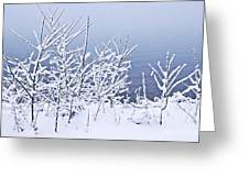 Snowy Trees Greeting Card