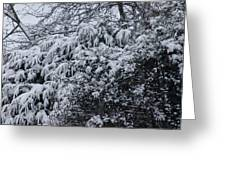 Snowy Winter Branches Greeting Card
