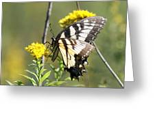 So Fragile - Butterfly Greeting Card