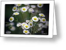 So Many Flowers So Little Time Greeting Card