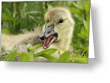 So Much To Say So Little Time For A Gosling Greeting Card