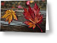 Soaked Leaves Greeting Card