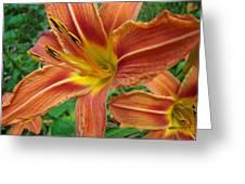 Soaking Up The Sun - Orange Daylily Greeting Card