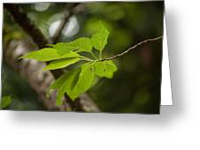 Soaring Leaves Greeting Card