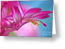 Soft And Delicate Cactus Bloom Greeting Card