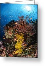 Soft Coral And Sea Fan, Fiji Greeting Card