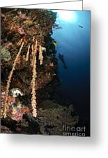 Soft Coral Reef, Indonesia Greeting Card