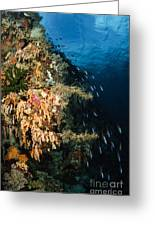 Soft Coral Seascape And Rainbow Greeting Card