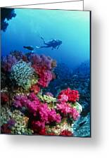Soft Corals Greeting Card