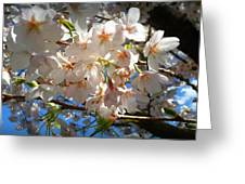 Soft Flowers Greeting Card