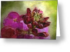Soft Magenta Greeting Card