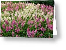 Soft Meadow  Greeting Card