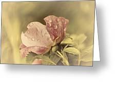 Soft Peddles Greeting Card