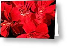 Soft Petals Cascade Greeting Card