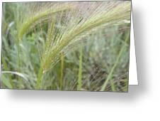 Soft Rain On Grass Greeting Card
