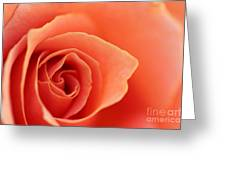 Soft Rose Petals Greeting Card