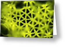 Soft Rush Stem, Light Micrograph Greeting Card
