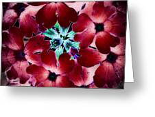 Soft Scarlet Floral Greeting Card