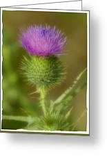 Soft Thistle Greeting Card