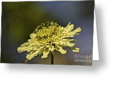 Soft Yellow. Greeting Card