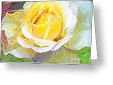 Softly Blooming Rose Greeting Card
