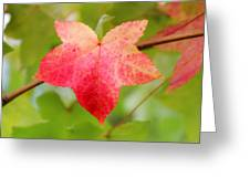 Softly Comes The Fall  2 Greeting Card