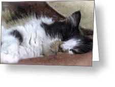 Softly Sleeping Greeting Card