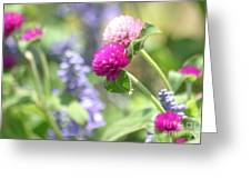 Softness In The Garden Greeting Card