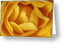 Softness In Yellows Greeting Card