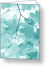 Softness Of Teal Maple Leaves Greeting Card