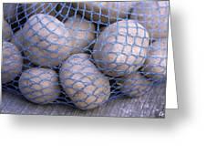 Solanum Tuberosum 'charlotte' Greeting Card