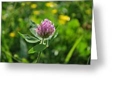 Solitarty Clover Greeting Card