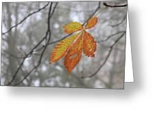Solitary Leaf Greeting Card
