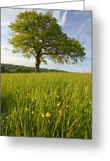 Solitary Oak Tree And Wildflowers In Greeting Card