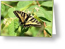 Solitary Swallowtail Greeting Card