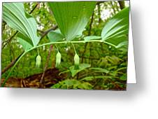 Solomon's Seal Wildflower - Polygonatum Commutatum Greeting Card