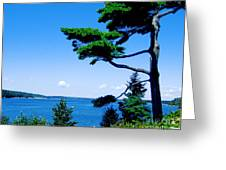 Somes Sound  Greeting Card